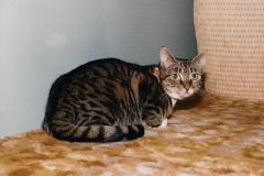 1997 Jenny. (140) 141