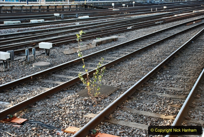 2019-12-15 London. (63) The Euston Station Garden. 063
