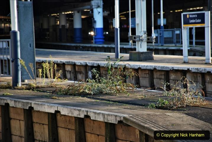 2019-12-15 London. (64) The Euston Station Garden. 064