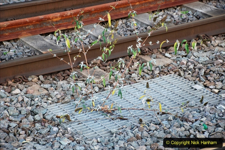 2019-12-15 London. (65) The Euston Station Garden. 065