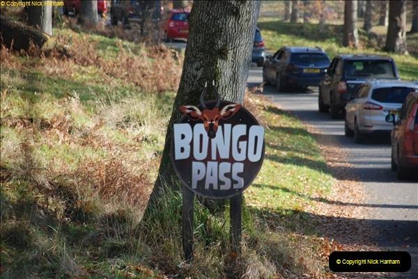 2018-11-17 Longleat Safari Park & Festival of Light.  (20)020