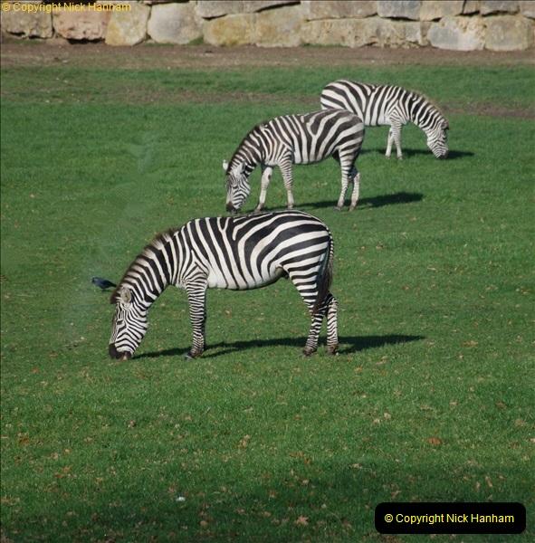 2018-11-17 Longleat Safari Park & Festival of Light.  (28)028
