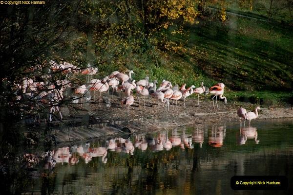 2018-11-17 Longleat Safari Park & Festival of Light.  (55)055