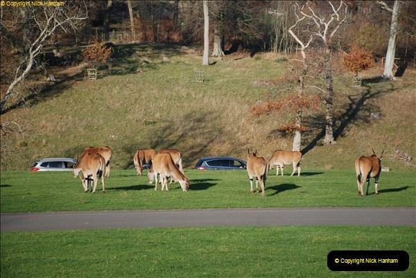 2018-11-17 Longleat Safari Park & Festival of Light.  (85)085