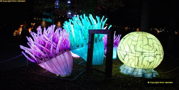 2018-11-17 Longleat Safari Park & Festival of Light.  (205)205