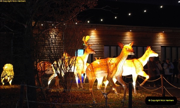2018-11-17 Longleat Safari Park & Festival of Light.  (206)206
