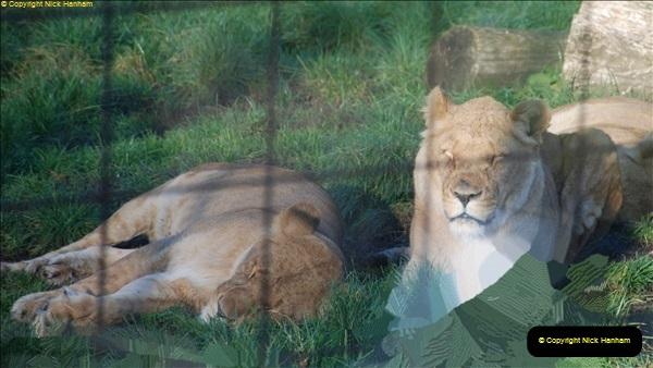 2018-11-17 Longleat Safari Park & Festival of Light.  (99)099