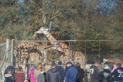 2018-11-17 Longleat Safari Park & Festival of Light.  (25)025