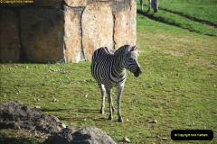 2018-11-17 Longleat Safari Park & Festival of Light.  (27)027