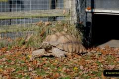 2018-11-17 Longleat Safari Park & Festival of Light.  (41)041
