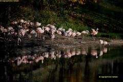 2018-11-17 Longleat Safari Park & Festival of Light.  (56)056