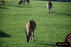 2018-11-17 Longleat Safari Park & Festival of Light.  (79)079
