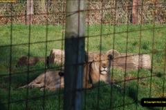 2018-11-17 Longleat Safari Park & Festival of Light.  (98)098