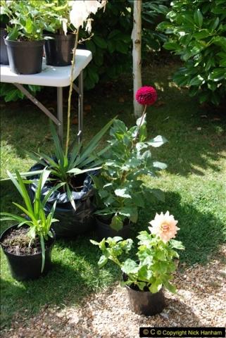 2015-08-09 Open Garden in aid of the Dorset Cancer Centre Holt, Wimborne, Dorset. (36)052