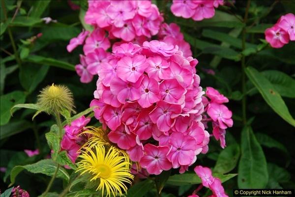 2015-08-09 Open Garden in aid of the Dorset Cancer Centre Holt, Wimborne, Dorset. (39)055