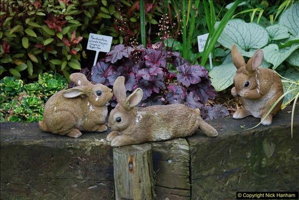 2015-08-09 Open Garden in aid of the Dorset Cancer Centre Holt, Wimborne, Dorset. (41)057