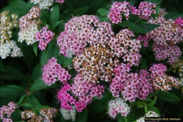 2015-08-09 Open Garden in aid of the Dorset Cancer Centre Holt, Wimborne, Dorset. (46)062