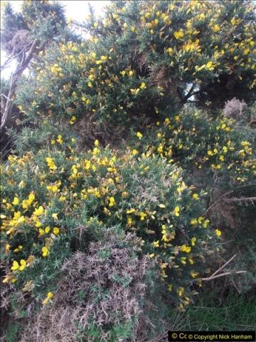 2015-10-31 Canford Cliffs, Poole, Dorset.  (14)110