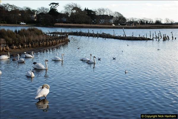 2017-02-24 Poole Park, Poole, Dorset.  (15)258