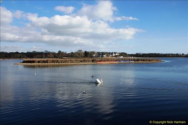 2017-02-24 Poole Park, Poole, Dorset.  (24)267