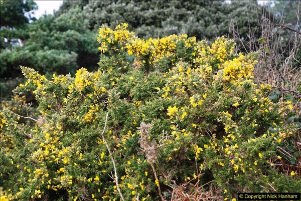 2017-03-04 Evening Hill & Sandbanks, Poole, Dorset.  (21)298