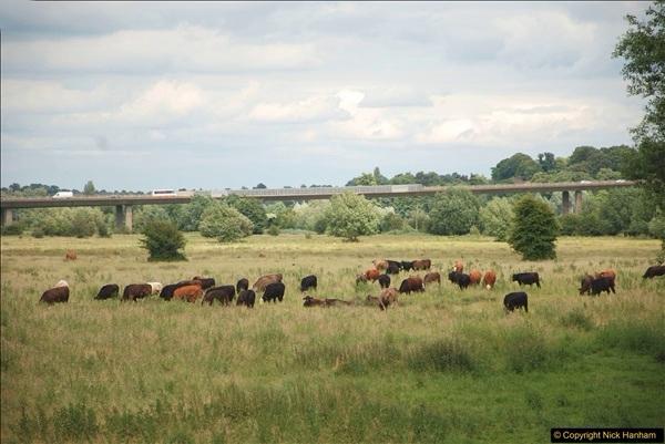 2018-06-20 Ware to Heartford East River Lea, Hertfordshire walk.  (38)485