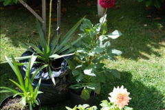 2015-08-09 Open Garden in aid of the Dorset Cancer Centre Holt, Wimborne, Dorset. (36)052
