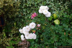 2015-08-09 Open Garden in aid of the Dorset Cancer Centre Holt, Wimborne, Dorset. (37)053