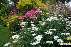 2015-08-09 Open Garden in aid of the Dorset Cancer Centre Holt, Wimborne, Dorset. (38)054