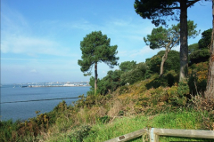 2015-10-20 Evening Hill, Poole, Dorset.  (13)088