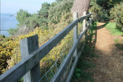 2015-10-20 Evening Hill, Poole, Dorset.  (19)094