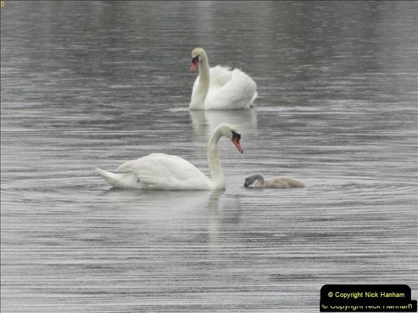 2018-06-07 Poole Park, Poole, Dorset.  (10)43