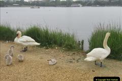 2018-06-07 Poole Park, Poole, Dorset.  (8)41