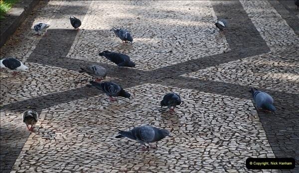 2012-11-08 Funchal, Madeira.  (213)338