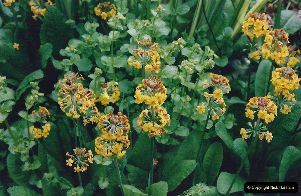 1999 June, Stamford - Burghley - Barnsdale. (105) Number 28 Stream and Bog Garden. 105