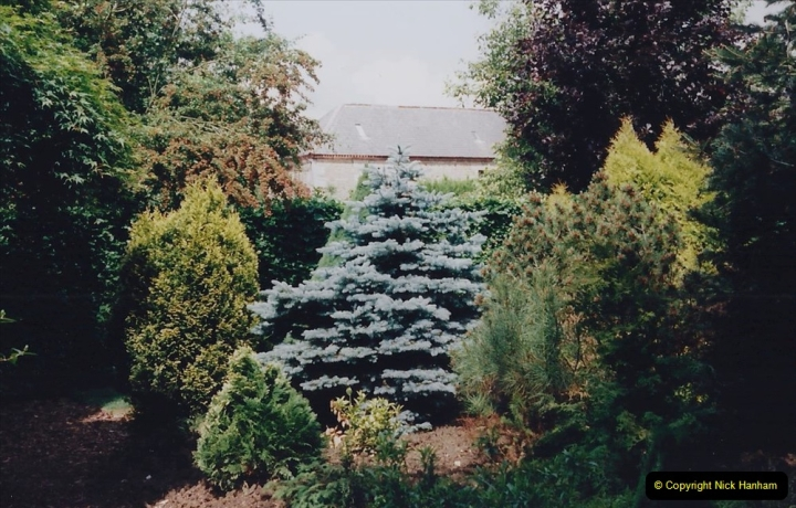 1999 June, Stamford - Burghley - Barnsdale. (90) Conifers. 090