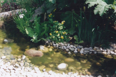 1999 June, Stamford - Burghley - Barnsdale. (104) Number 28 Stream and Bog Garden. 104