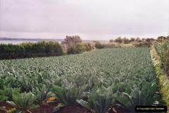 1994 France - October. (22) Artichoke crop.22