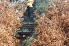 1995 France October. (33) Le Diben. 33