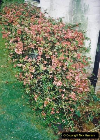 2000 Miscellaneous. (32) A New Milton, Hampshire garden. 032