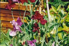 2000 Miscellaneous. (125) Our back garden. 126