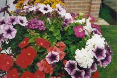 2000 Miscellaneous. (165) Our Back Garden. 166