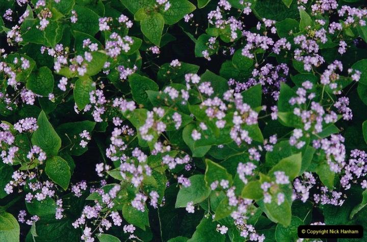 2001 Miscellaneous. (79) Hatchlands Park, Guildford, Surrey. 079