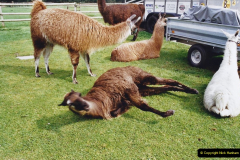 2002 September 04 Taking Llamas for a Walk. (10) 10