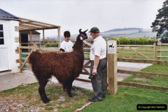 2002 September 04 Taking Llamas for a Walk. (17) Your Host combes a lama. 17