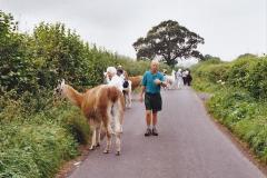 2002 September 04 Taking Llamas for a Walk. (21) 21