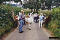 2002 September 04 Taking Llamas for a Walk. (28) 28