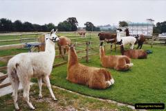 2002 September 04 Taking Llamas for a Walk. (29) 29