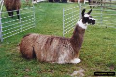 2002 September 04 Taking Llamas for a Walk. (8)08