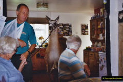 2002 September 04 Taking Llamas for a Walk. (9) A house trained lama.09